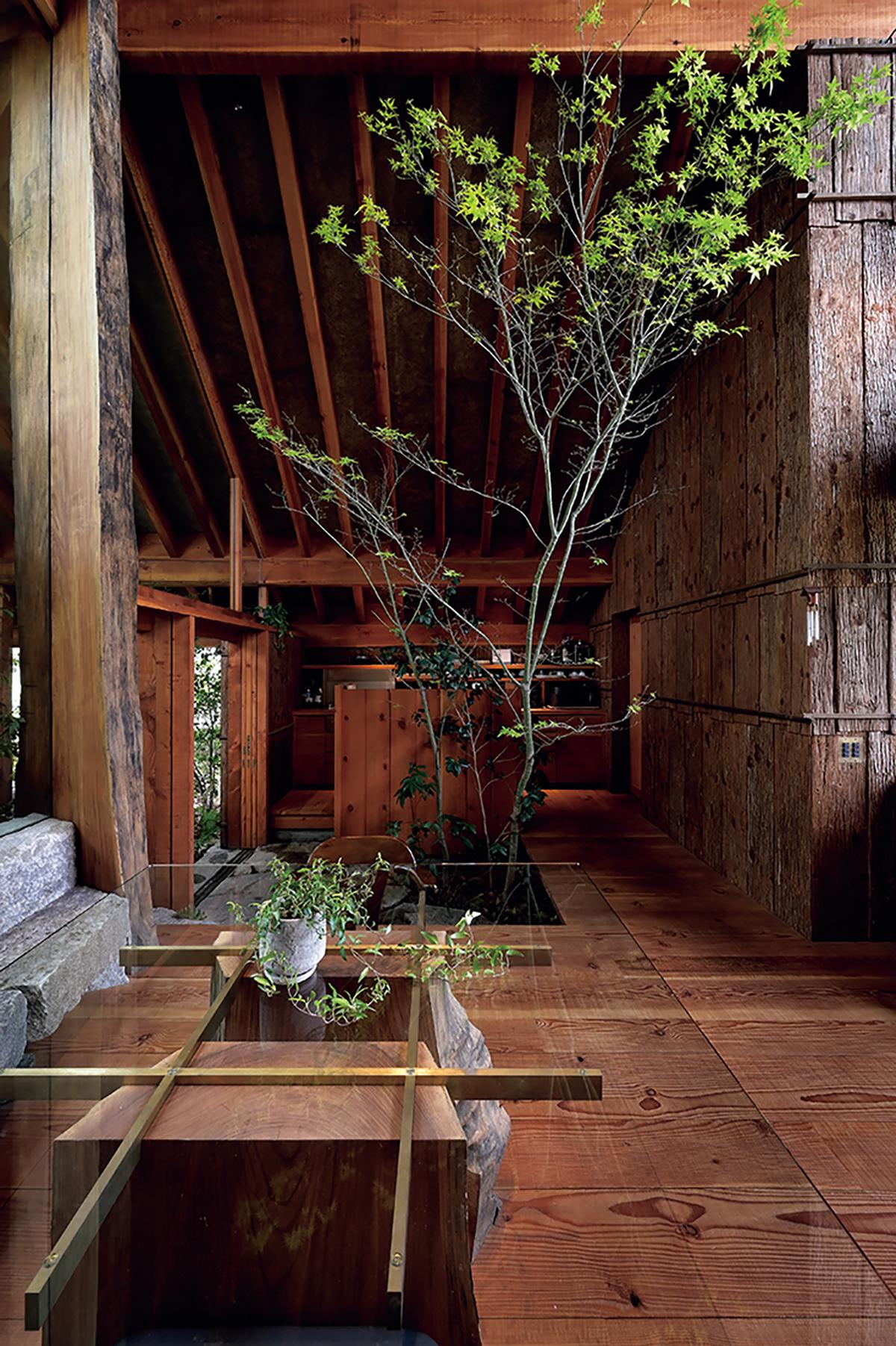 屋内の大きな木の向こうがキッチン。レンジフードは、必要な時だけ引き出す仕様。