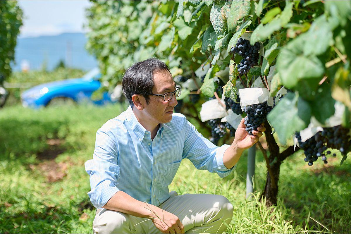 くらむぼんワインの4代目オーナーの野沢たかひこさん。収穫を直前にひかえた葡萄畑で。